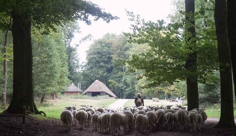 Order in Apeldoorn.